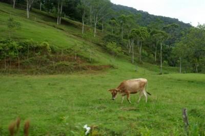 Quem nunca conversou com vaca, não sabe o que é pedalar