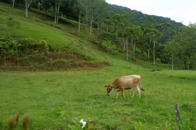 Quem nunca conversou com vaca, não sabe o que é pedalar em Jaraguá do Sul